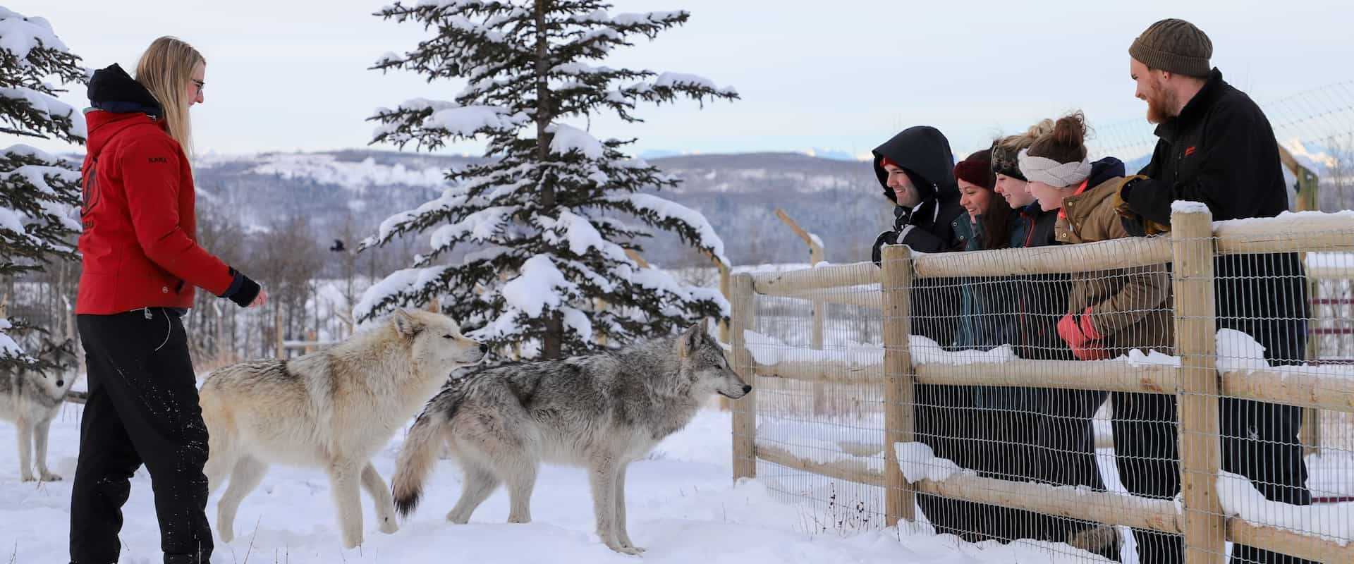 Wolfdog Sanctuary – Intro