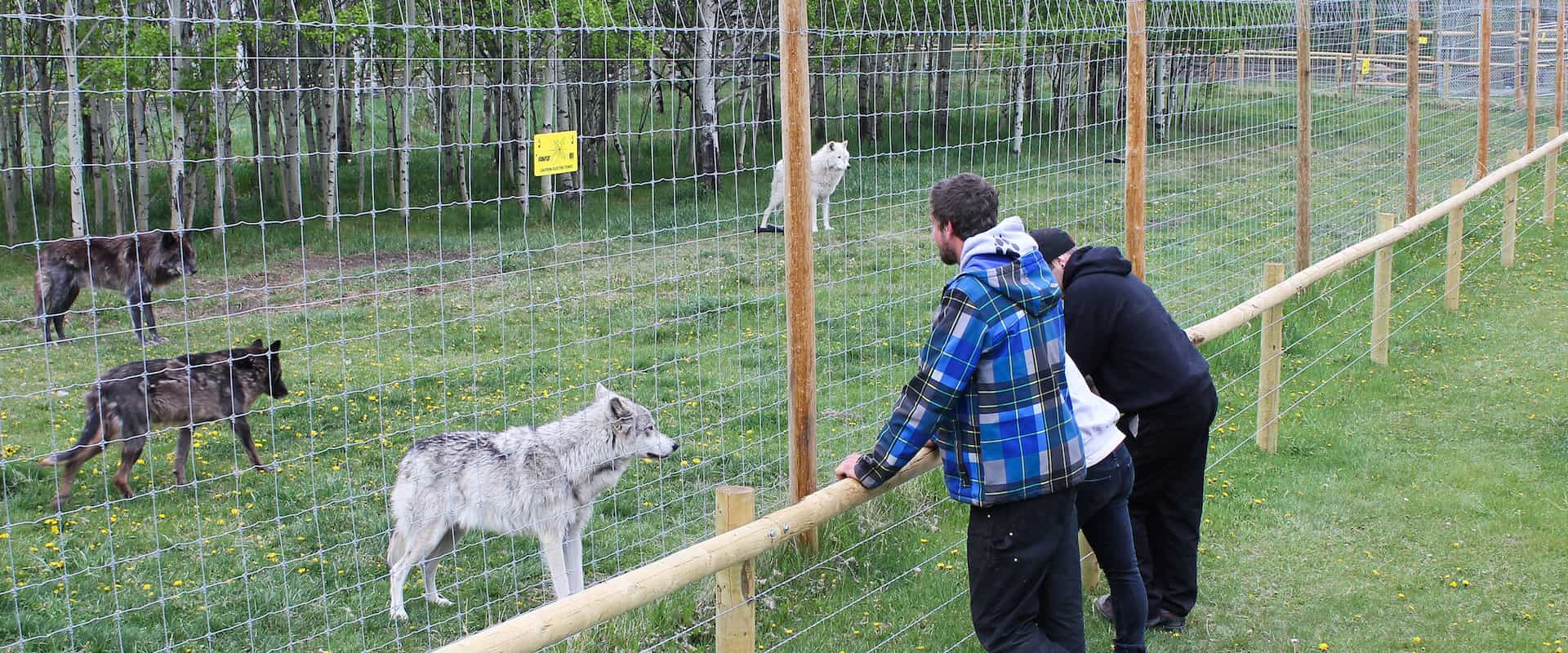 Wolfdog Sanctuary – Self Guided