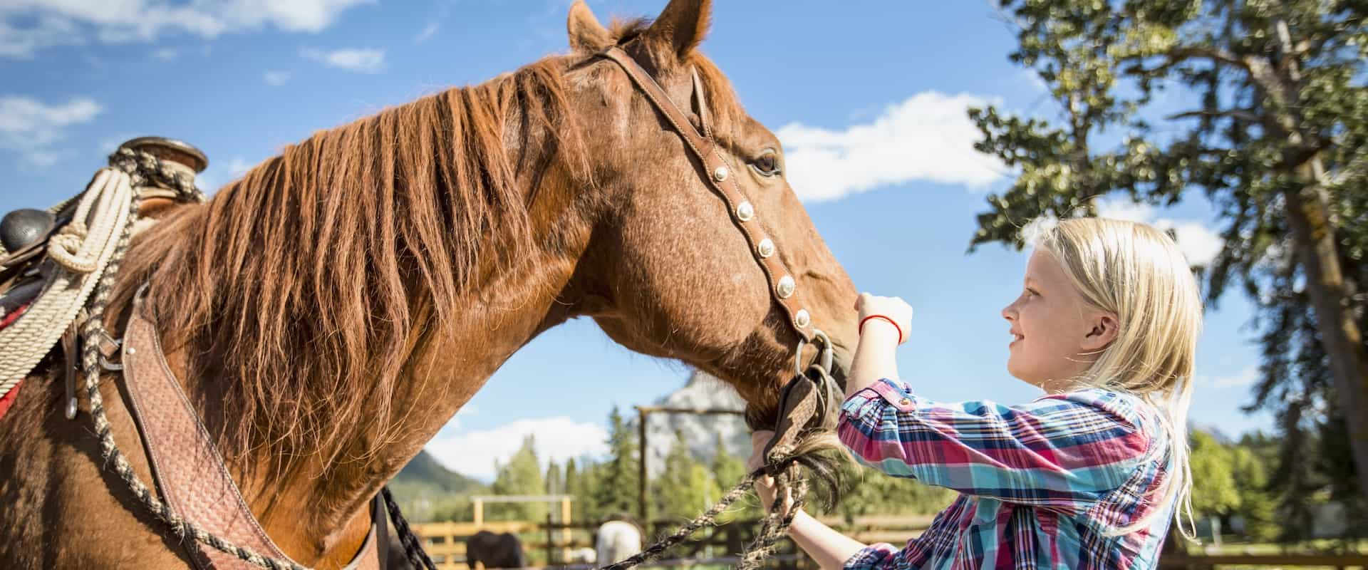 Children and families love meeting the horses on a carriage ride or wagon ride