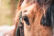 We have 300 friendly horses to choose from for horseback rides
