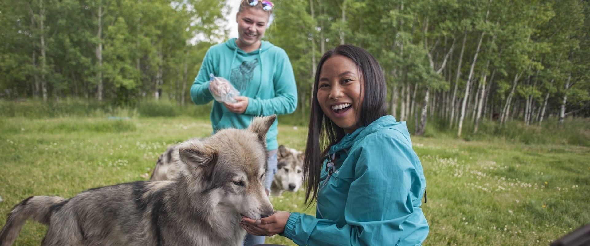 Wolfdog Sanctuary – Interactive
