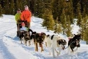 A team of sled dogs will pull you along in Lake Louise