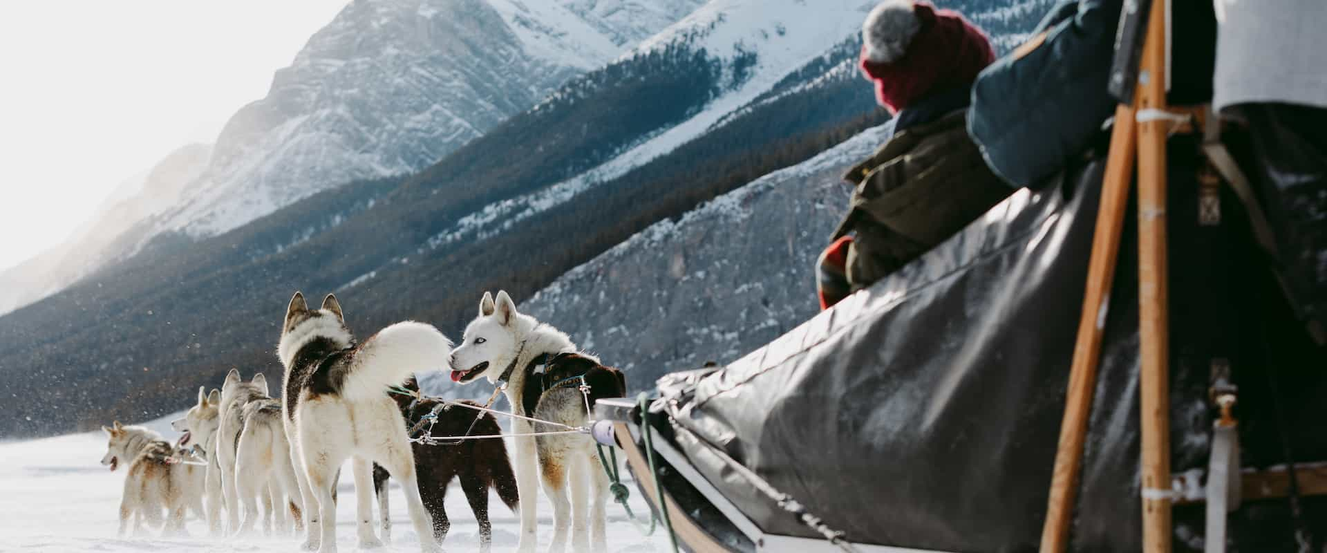 Drive your own team of dogs on a dogsled tour at Spray Lakes in the Canadian Rockies