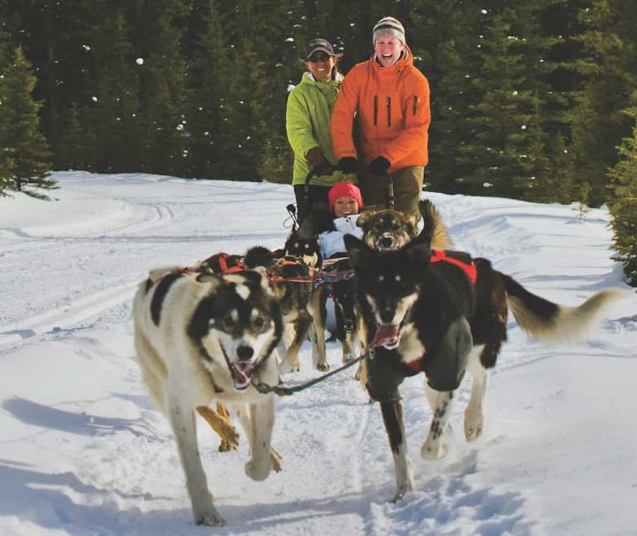 Experience driving the sled on a dogsledding tour in Lake Louise in the Canadian Rockies