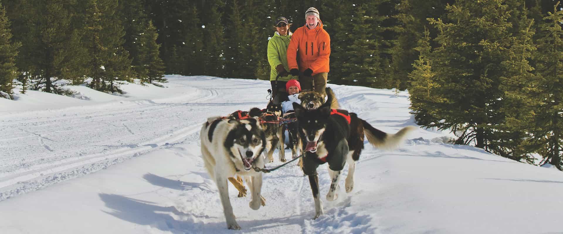 Dogsledding – Great Alone 1.5 Hrs