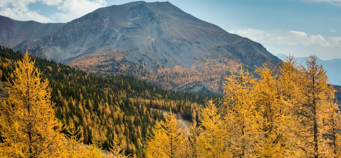 See fall colours and larch trees at Larch Valley with Discover Banff Tours