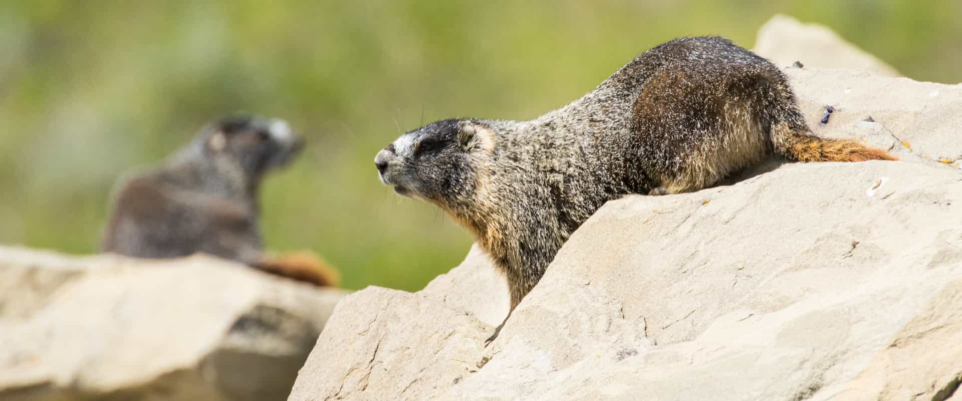 See wildlife such as marmots in Banff National Park
